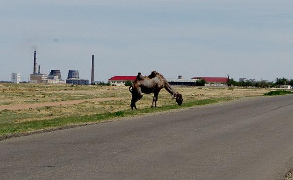 Baikonur Cosmodrome with a camel