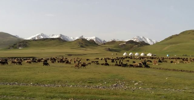 highlights of the central asia rally